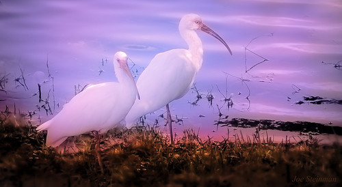 pink lake inspiration art nature water beautiful birds photographer purple artistic serenity mystical dreamy serene inspirational spiritual naturalbeauty magical dreamscape egrets elegance landscapephotography naturesbeauty