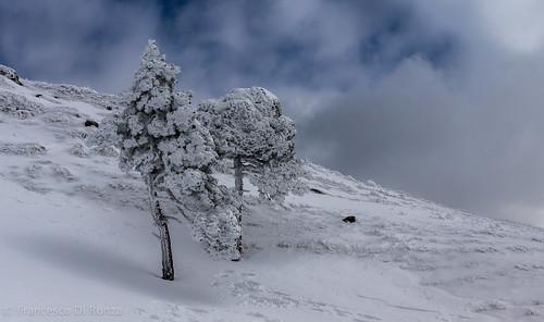 schnee trees winter snow alps nature schweiz sony natur skyandclouds alpen bäume arth ch snowscape schwyz mountainlandscape schneelandschaft rigikulm himmelundwolken berglandschaft slta77 dt1650mmf28ssm