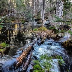 Rampaging meltwater flowing into East Bearskin Lake by site #22 in the campground.  #bearskinlodge #gunflinttrail #onlyinmn