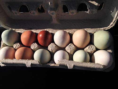 Shelburne Farms eggs