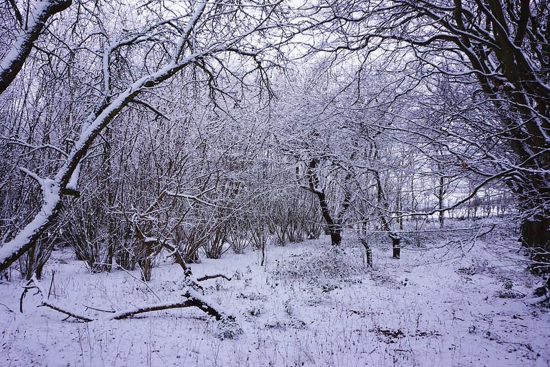 Vinterhave-midtjanuar-2016 (6)