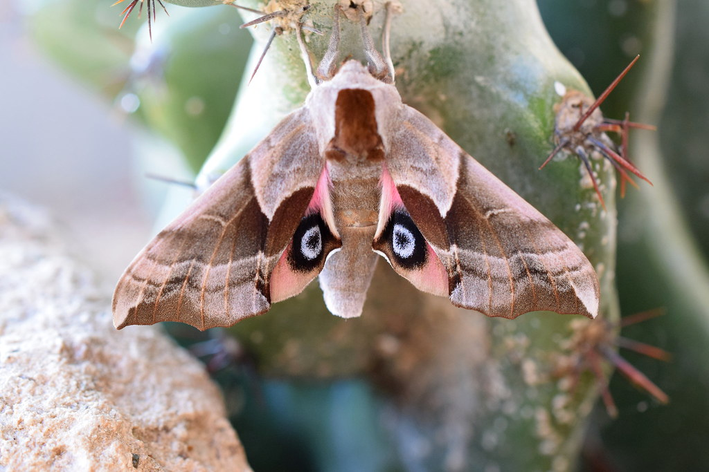 Moth and Cactus