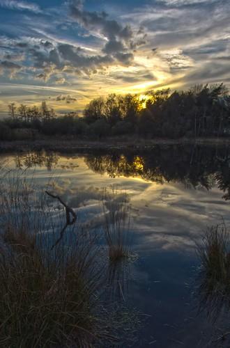 nature water netherlands dutch pond wetlands hdr thurkske