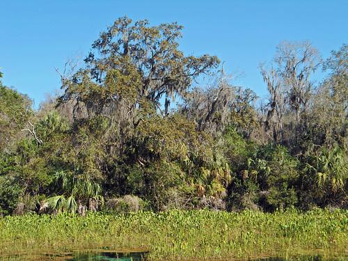 trees water landscape scenery florida marsh dunnellon aquaticvegetation