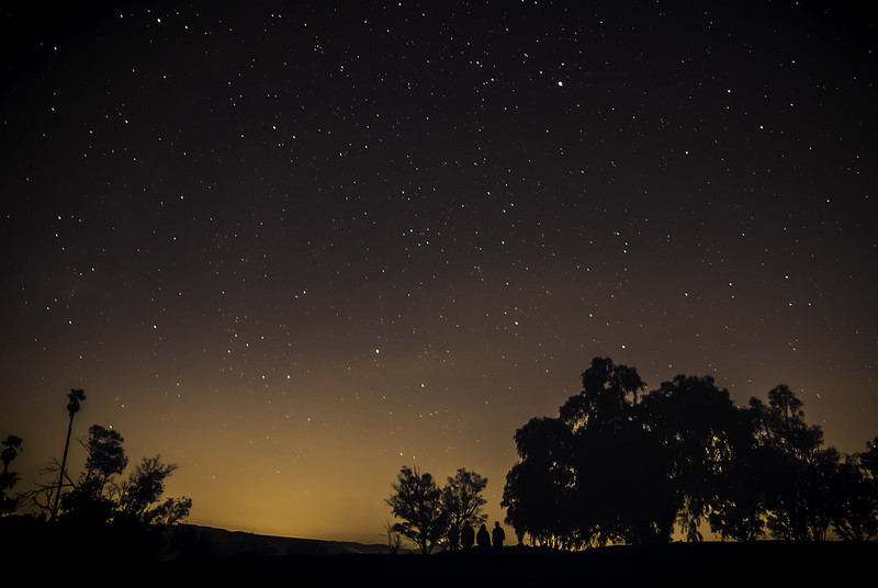 Nightime Wanderers
