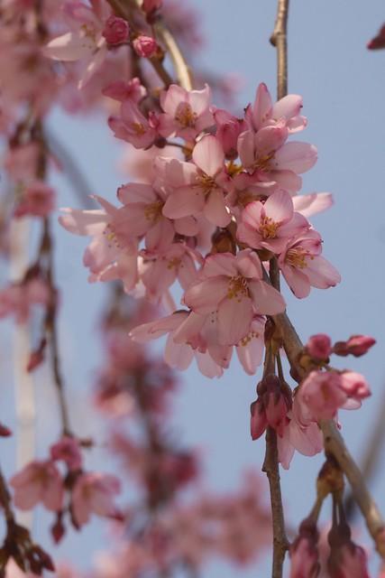 土, 2016-03-26 14:46 - Brooklyn Botanic Garden