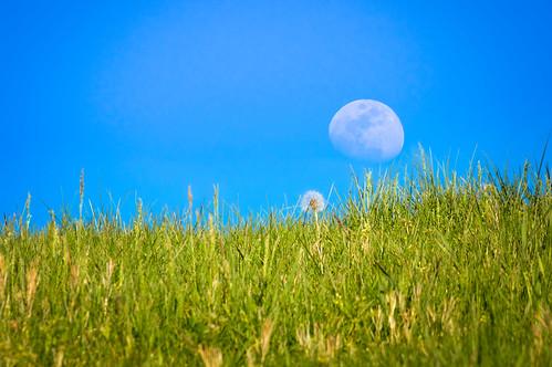 above blue sky moon detail green nature field grass outdoors rising us spring day unitedstates dandelion westvirginia rectangle gibbous lavalette