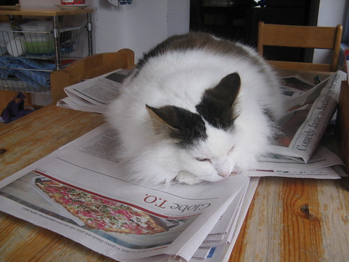 Fluffy cat reads the Globe and Mail newspaper