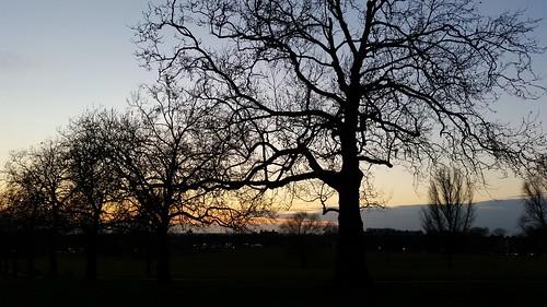 trees sunset london silhouette streatham lambeth londonpark streathamcommon londonsunset