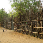 Ethiopia fence constructed of wood poles (submitted by Abby Morris)