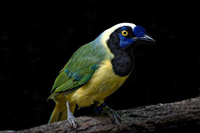 Bronx Zoo Bird1