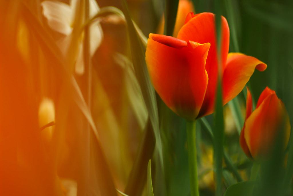 Flower 135mm #1874