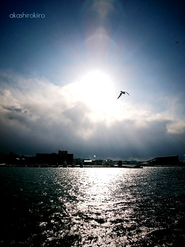 sea sky japan shine seagull aomori hachinohe 太陽 海 青森 sushine カモメ 輝き 八戸