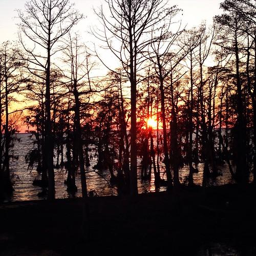 trees sunset nc sound cypress edenton albemarle