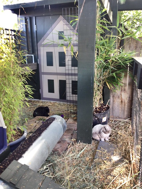 The bunny House and Yard (under development )