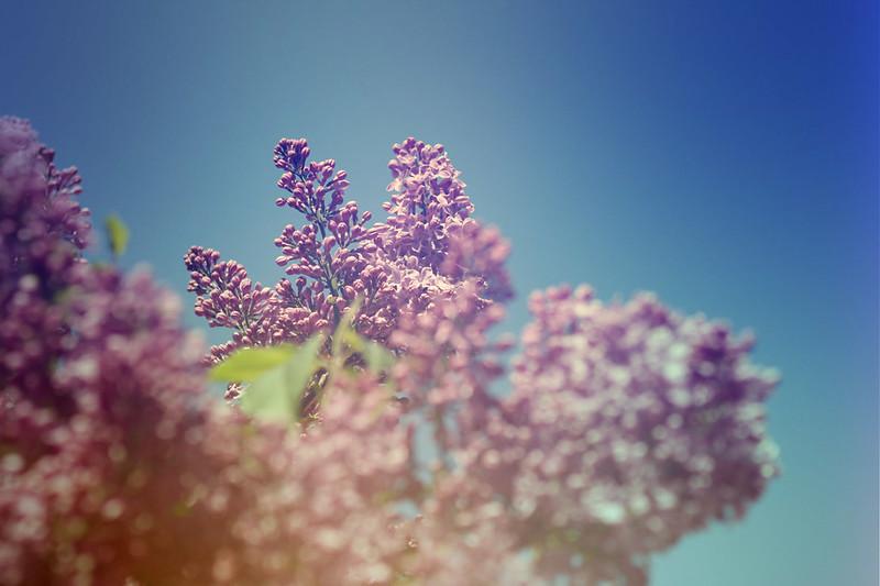 blur-dreamy-texture-texturepalace-28