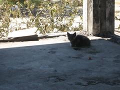 Squatting Cat