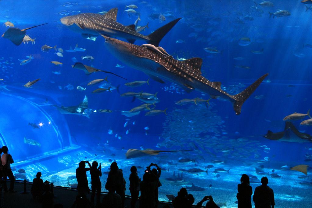 Image result for aquarium flickr