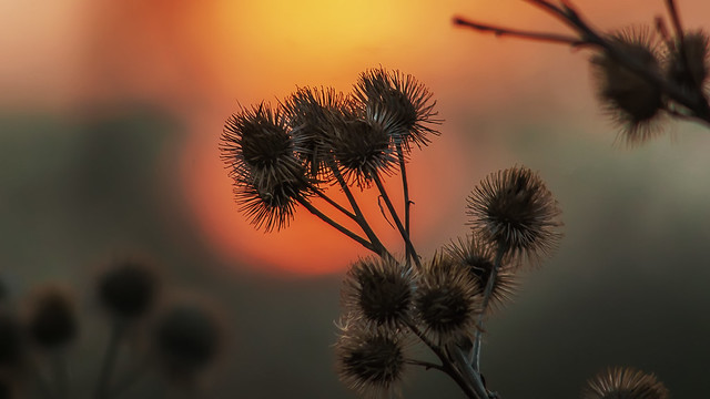 Prickly sunset...