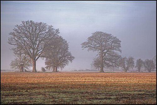 Lucksall Tree HDR P5D_0627-31 | by psmithuk