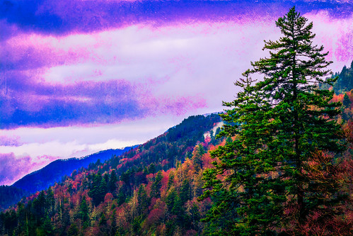 mountain tree nature forest landscape nationalpark colorful purple evergreen majesty greatsmokymountains