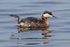 get you feet up in the air! Red-necked Grebe (Podiceps grisegena) by Ron Winkler nature