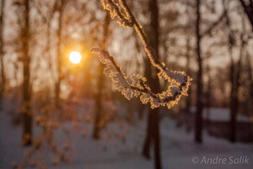 Мороз в парке Аркадия.14:47:10 DSC_6634