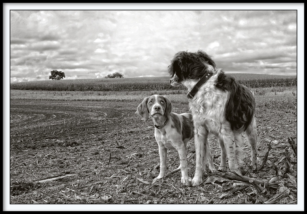 B&W Dog - 2