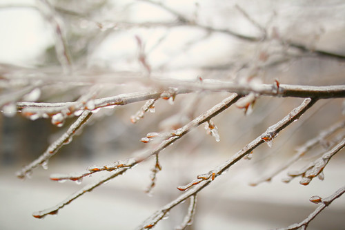 Glazed Branches