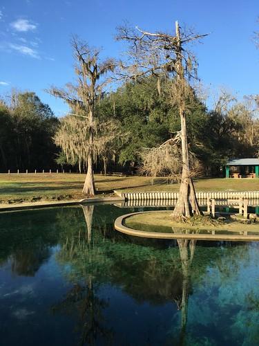 water december florida cypresstrees 2015 hartsprings