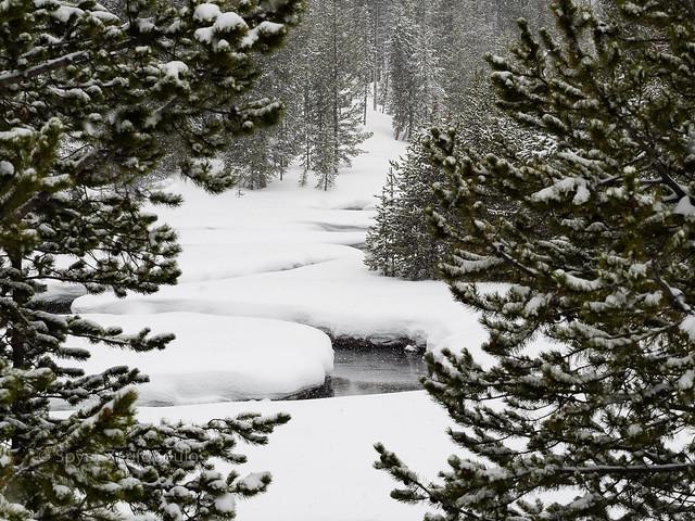 Winter wonderland...