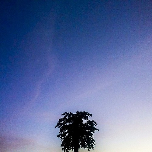 sunset home awesome minimal farms pawpaws igdaily uploaded:by=flickstagram kenya365 igafrica igkenya instagram:photo=619631140508854358227669921 instagram:venuename=happyvalleyestate instagram:venue=53511519