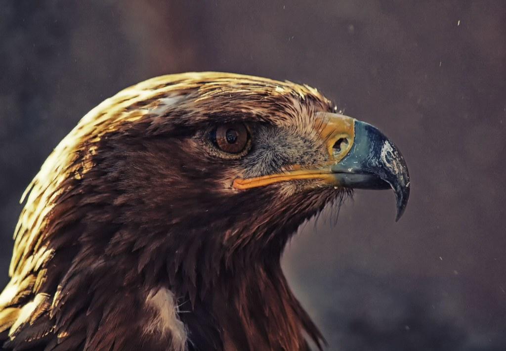 Animales - Naturaleza - Página 3 26049473824_99b09e0c1f_b