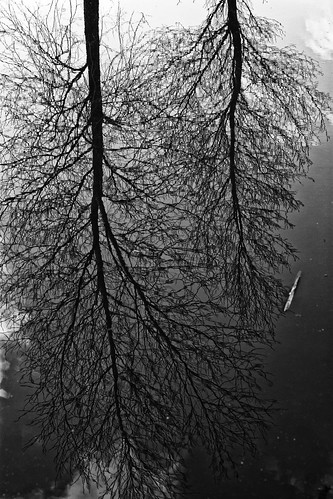 Branched In Water