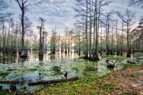 trees lake texas unitedstates cypress woodville steinhagen 3xp aurorahdr