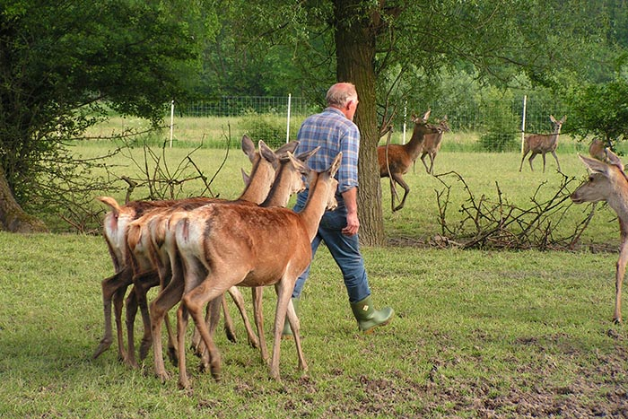 Nijbroek Hertenboerderij