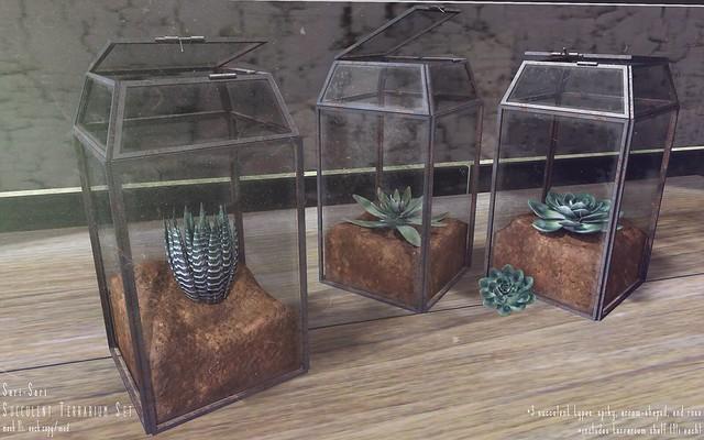 Sari-Sari - Succulent Terrarium Set
