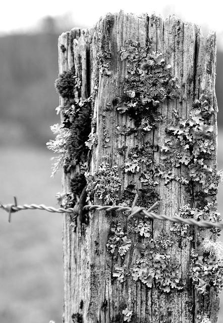 Lichen (in explore)