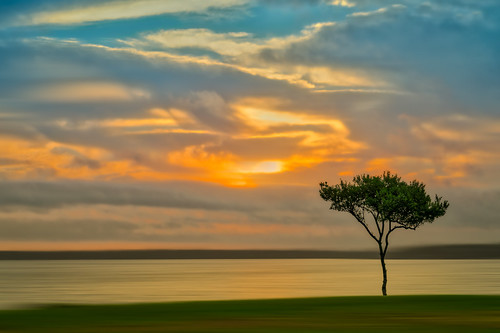 trees sun art water grass clouds sunrise photography us unitedstates florida fineart cloudscape palmetto dreamscape landscapephotography manateecounty sonyalpha sonya7r2