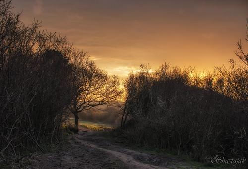 sunrise morninglight earlymorning daybreak hastingscountrypark earlymorningsunshine ecclesbourneglen