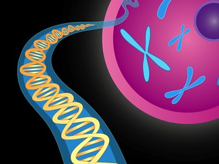 Chromosomes and DNA double helix | by National Institutes of Health (NIH)