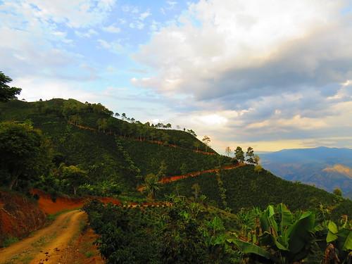 colombia concordia cafetales suroeste suroesteantioqueño concordiaantioquia caminosdeantioquia