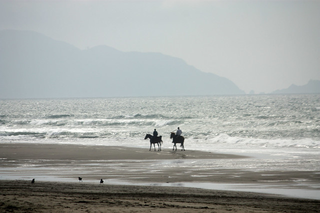 Horses By The Shore