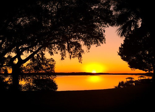 trees sunset silhouette sunrise silhouettes sunsets adamhall trackhead trackheadstudios trackheadxxx