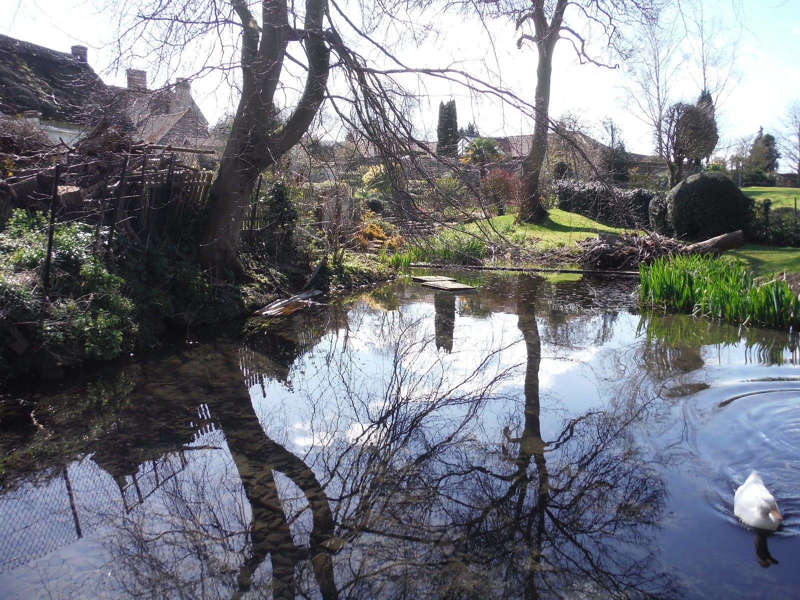 Pond in Cuddington SWC Walk 193 Haddenham to Aylesbury (via Gibraltar and Ford)