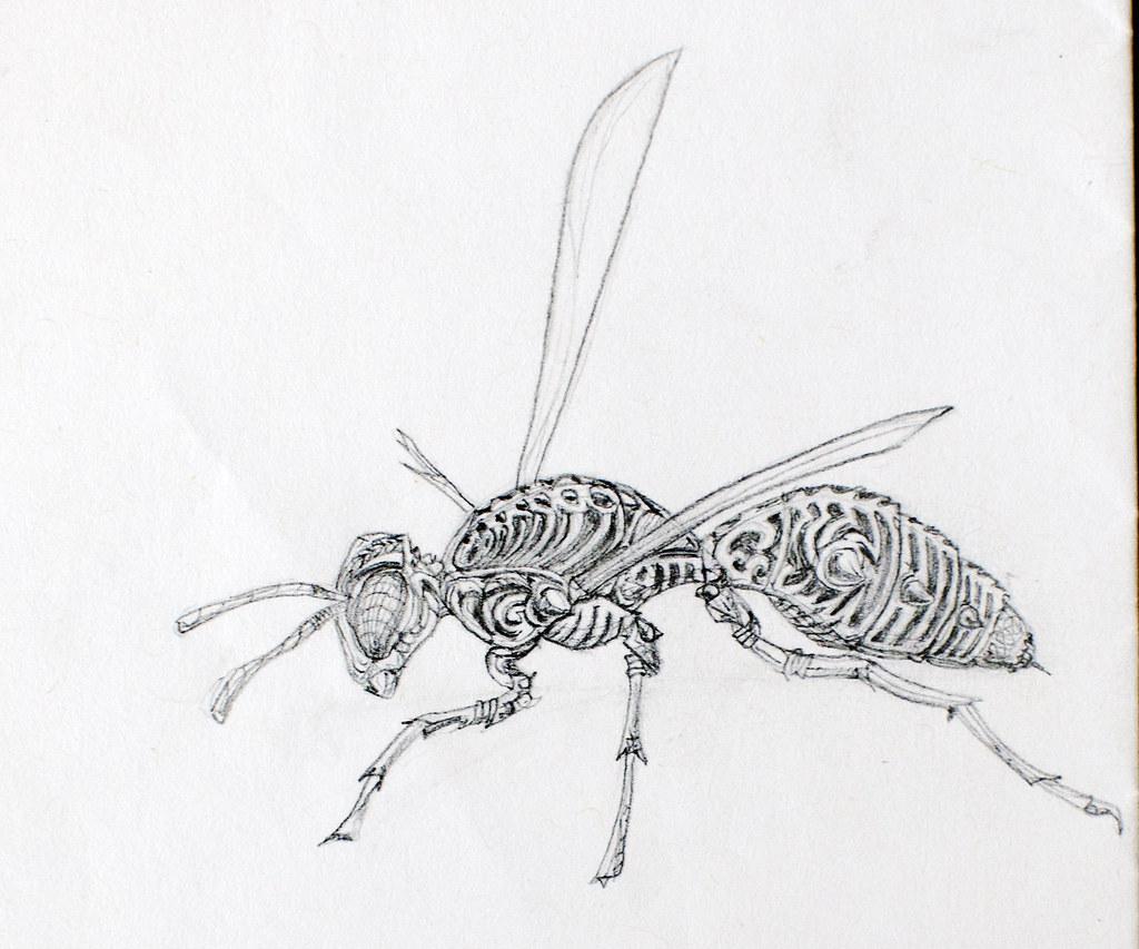 Wasp tattoo design pencil sketch by kirillnbb