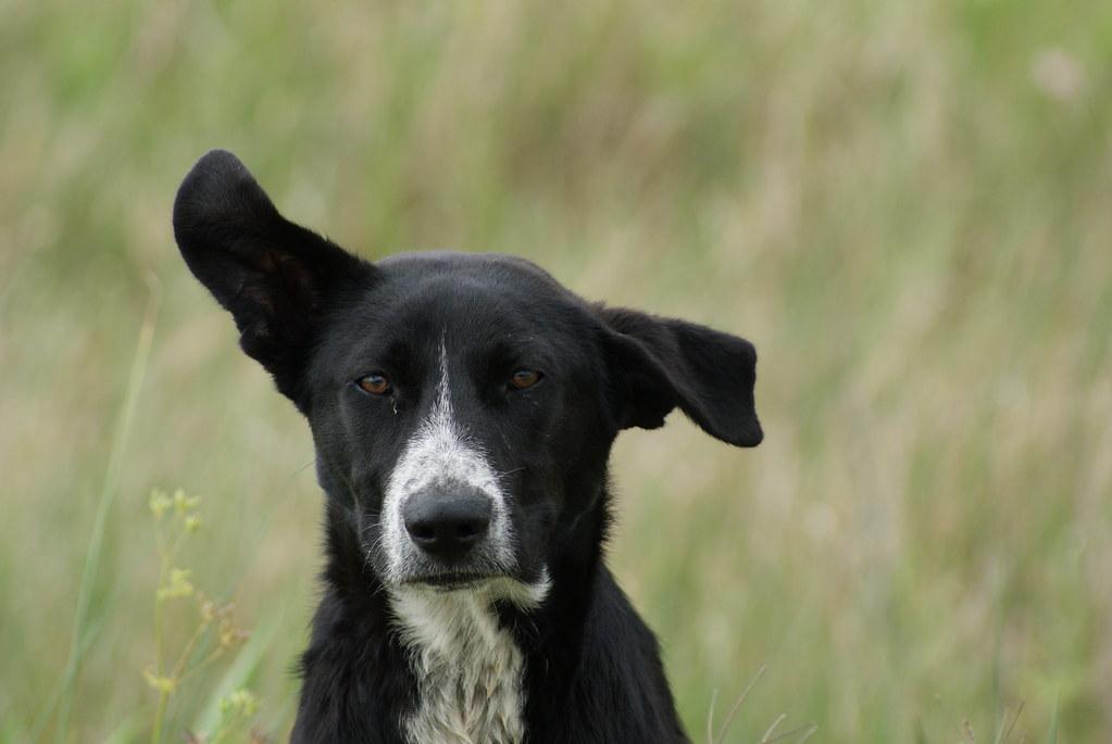 Abandoned Dog Anahauc NWR 4-16-16