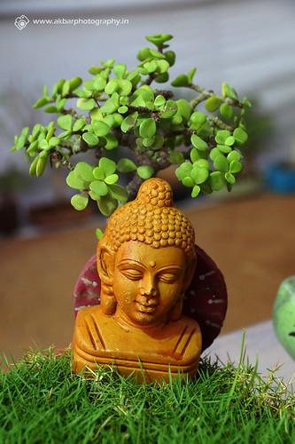 Budhha Garden 1 2 | by Akbar - Web Designer and Freelance Photographer
