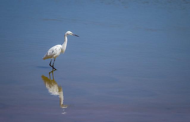69/366: Watch the birdie [Explored]