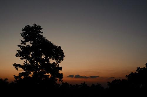 morning tree silhouette digital sunrise dawn 1 nikon dhaka bangladesh buet 000th dhakadivision rashidhall sheikhshahriarahmed